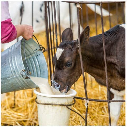 livestock feeding and watering solutions